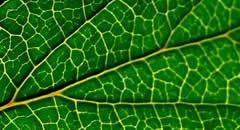 绿叶植物壁纸